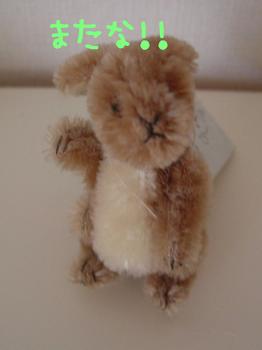 brenda_rabbit_001.JPG